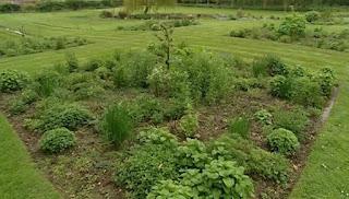 Bryony Martin garden