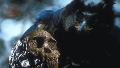 Đại bàng săn người