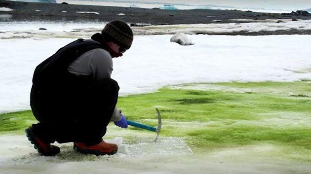 """""""Πράσινο χιόνι"""" στην Ανταρκτική"""