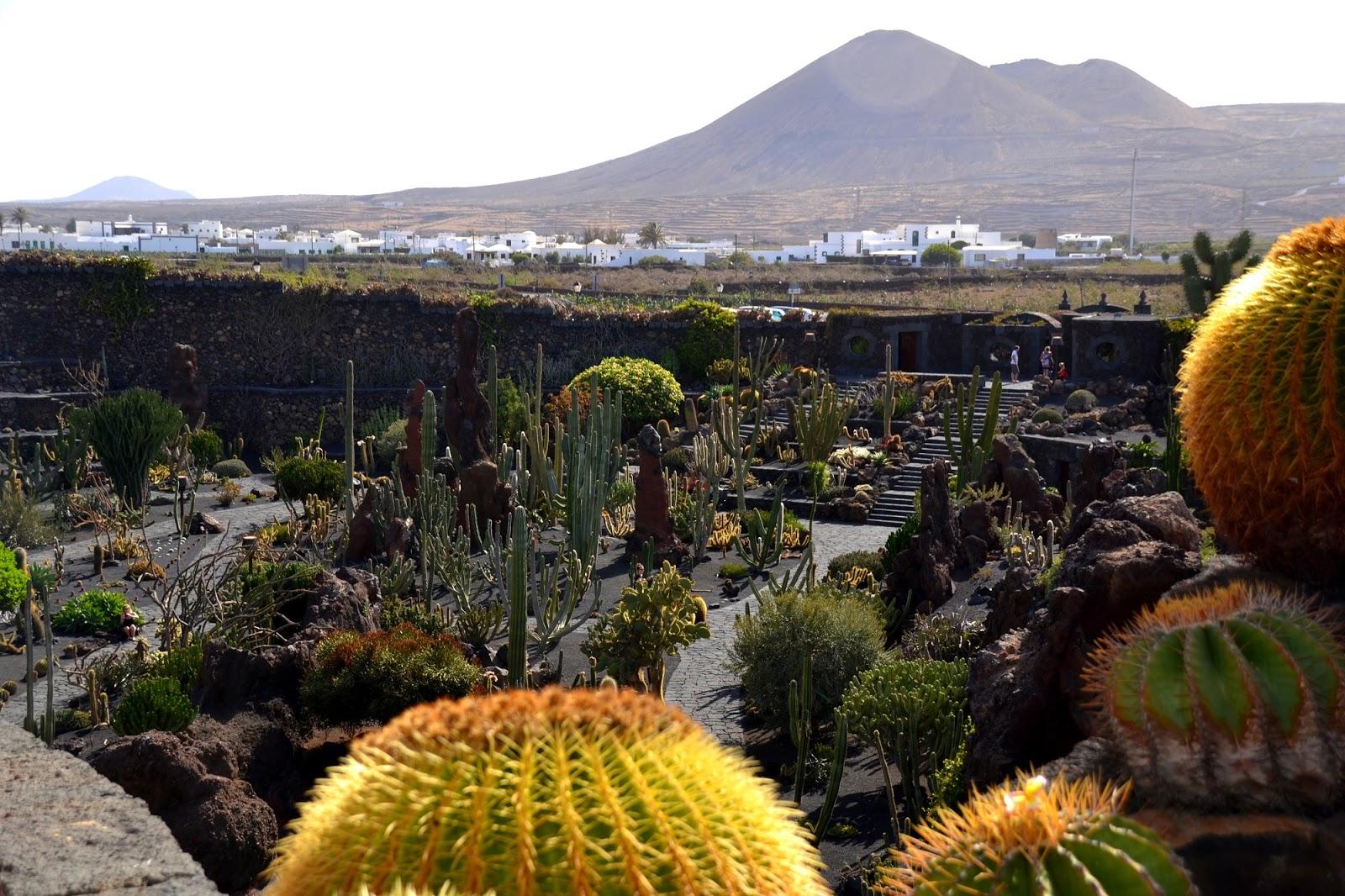 Camino de letras con syra jard n de cactus en lanzarote for Jardin canario horario