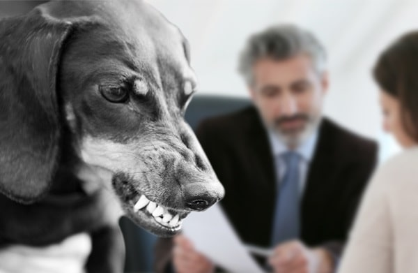 dog bite attorney pet bites lawsuit damages lawyer