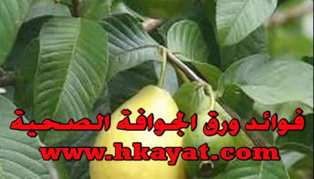 فوائد ورق الجوافة الصحية.. 11 فائدة صحية لورق الجوافة تعرف عليها