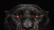 Black Tiger Glowing Eye