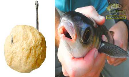 عجينة صيد السمك البوري بالسنارة