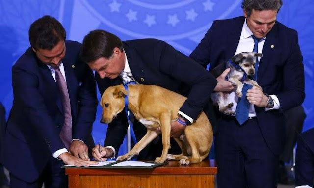 Sancionada lei que aumenta pena para maus-tratos de animais