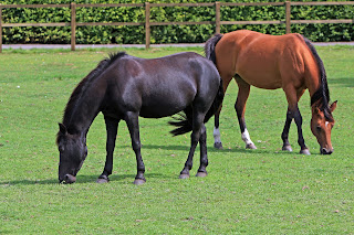 26 METHOD TO FEED AND BREED HORSES