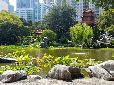 Koi Pond at Chinese Garden of Friendship Darling Harbour Sydney