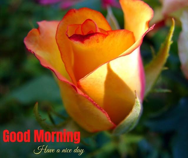 Celebration Good Morning