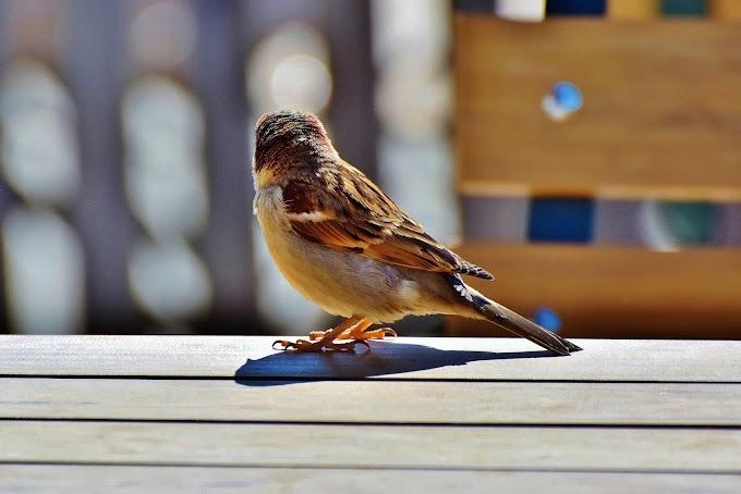 O sorriso e o pássaro [Poesia]