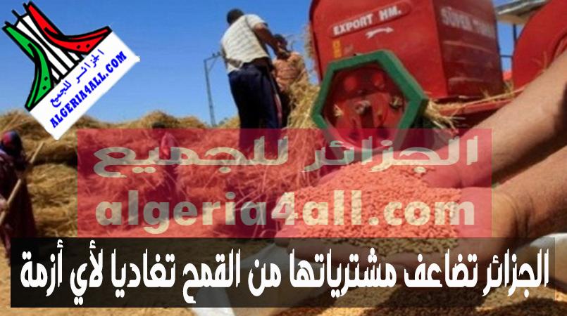 الجزائر تضاعف مشترياتها من القمح تفاديا لأي أزمة