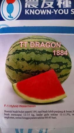 Semangka Dragon, Buah besar, Semangka TT Dragon harga Murah, Benih TT Dragon,buah keras,tahan simpan,tahan pecah, tahan angkut, cepat panen,rasa manis,murah, Known You Seed, Taiwan