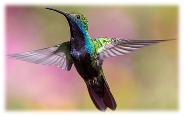 Humming Bird, NCERT class 6 chapter 8 body movements, www.educationphile.com