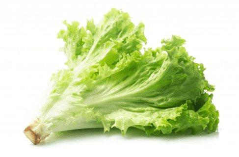 Benefits of lettuce. For diet, constipation and nerves.