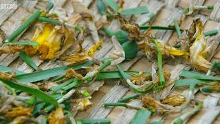 Deadhead Daffodils