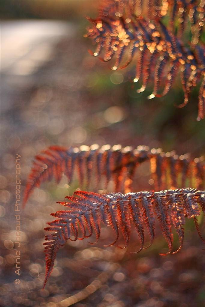 ferns in the light
