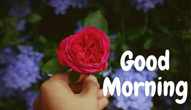 good morning red rose image