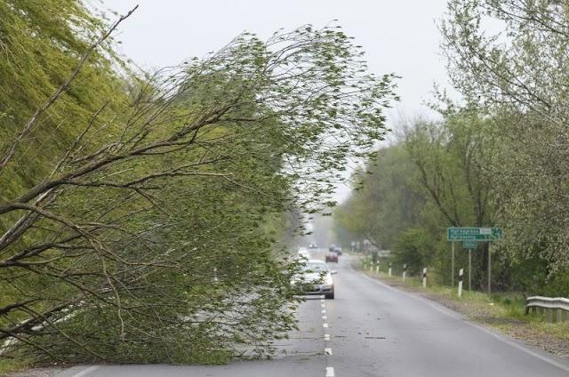 Kidőlt fák, leszakadt faágak Hajdú-Biharban