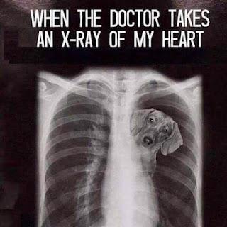 Doctor Memes, Dog Memes