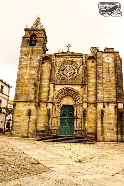 Iglesia de San Martiño de Noya