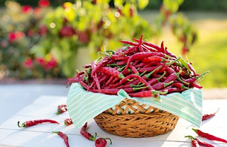 Sayuran Cabai