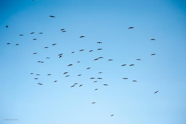 Đàn chim trở về