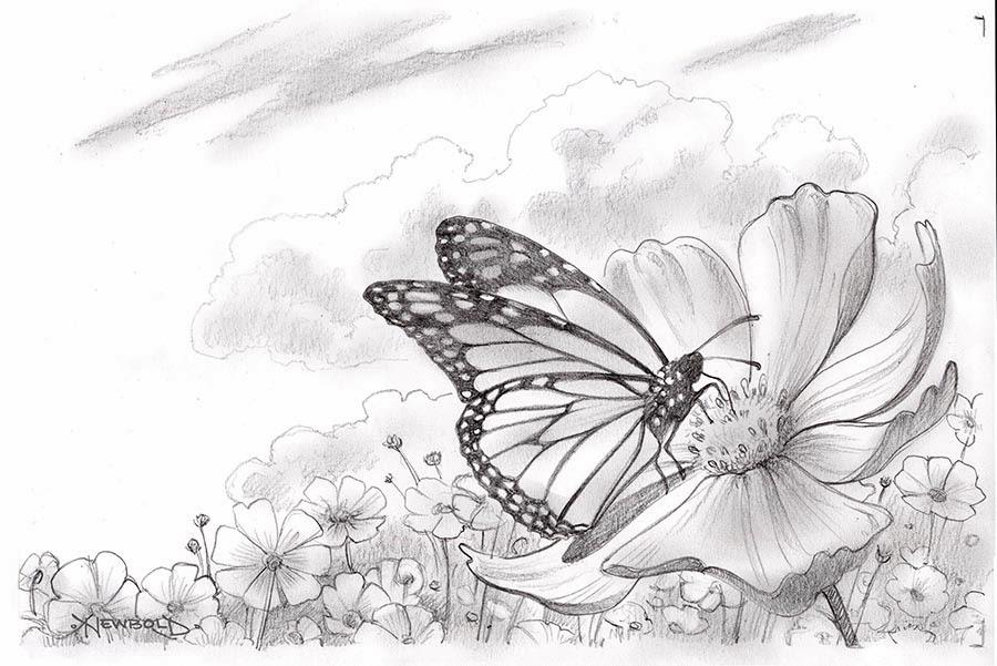 Картинки бабочка на цветке в карандаше, картинки