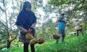 jaring durian