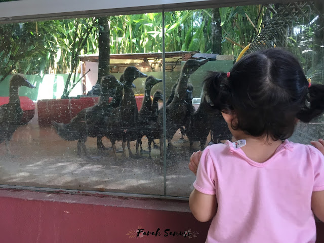 Wildlife Park, Langkawi