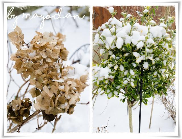 Schnee Garten