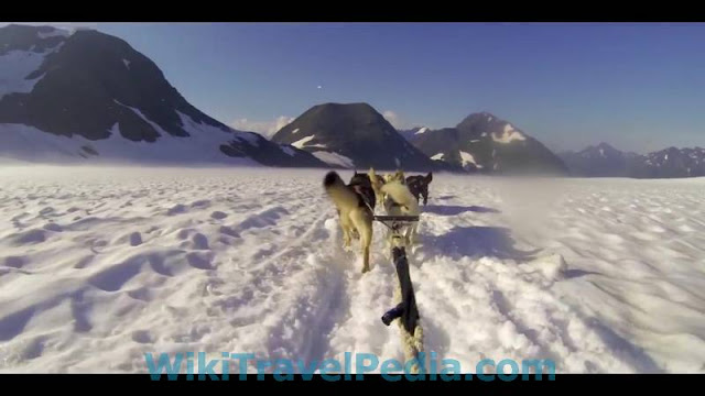 Anchorage fun on Ice Dog Cart