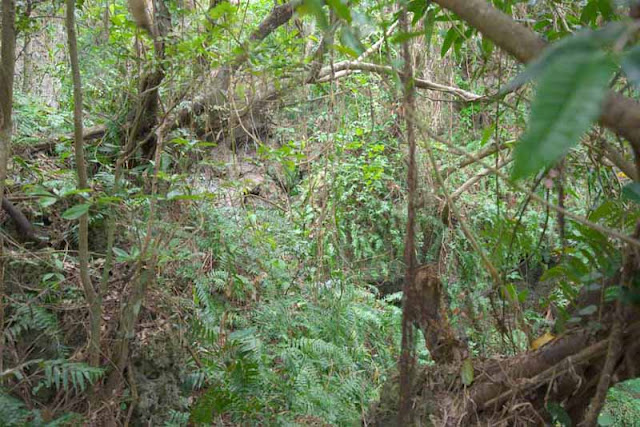 forest, nature, woods, vegetation, Okinawa