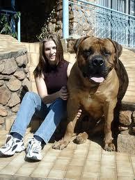 Foto de perro enorme