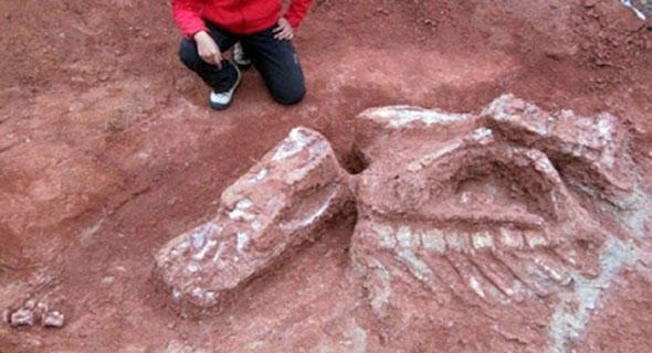 Di Argentina Ditemukan Fosil Dinosaurus Tertua