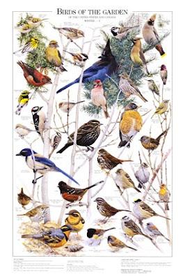 Birds of the garden poster 1