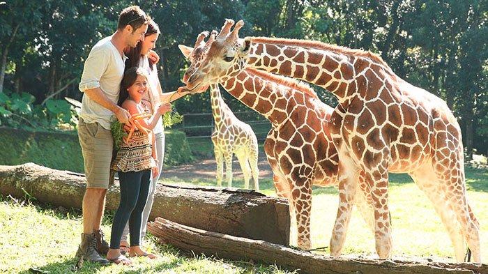 Berlibur Lebih Menyenangkan Dengan Mengunjungi Taman Safari