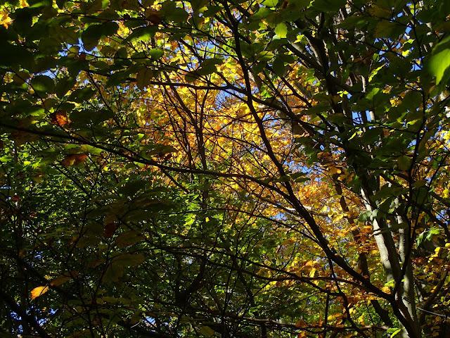 Kolory na beskidzkich drzewach