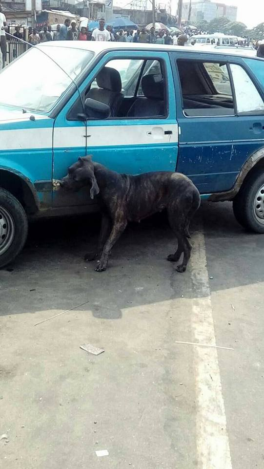 Dog Killed In Port-Harcourt After Transforming From A Man