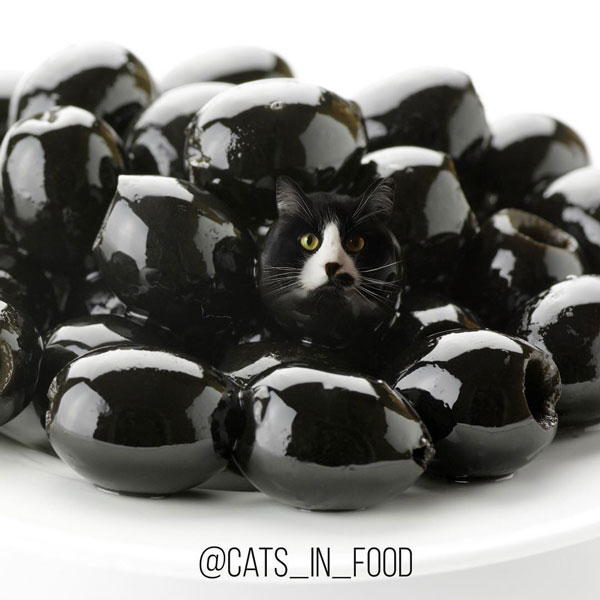 edit foto cats in food