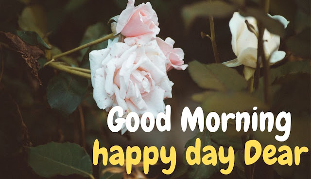 Good Morning happy day Dear white rose Image