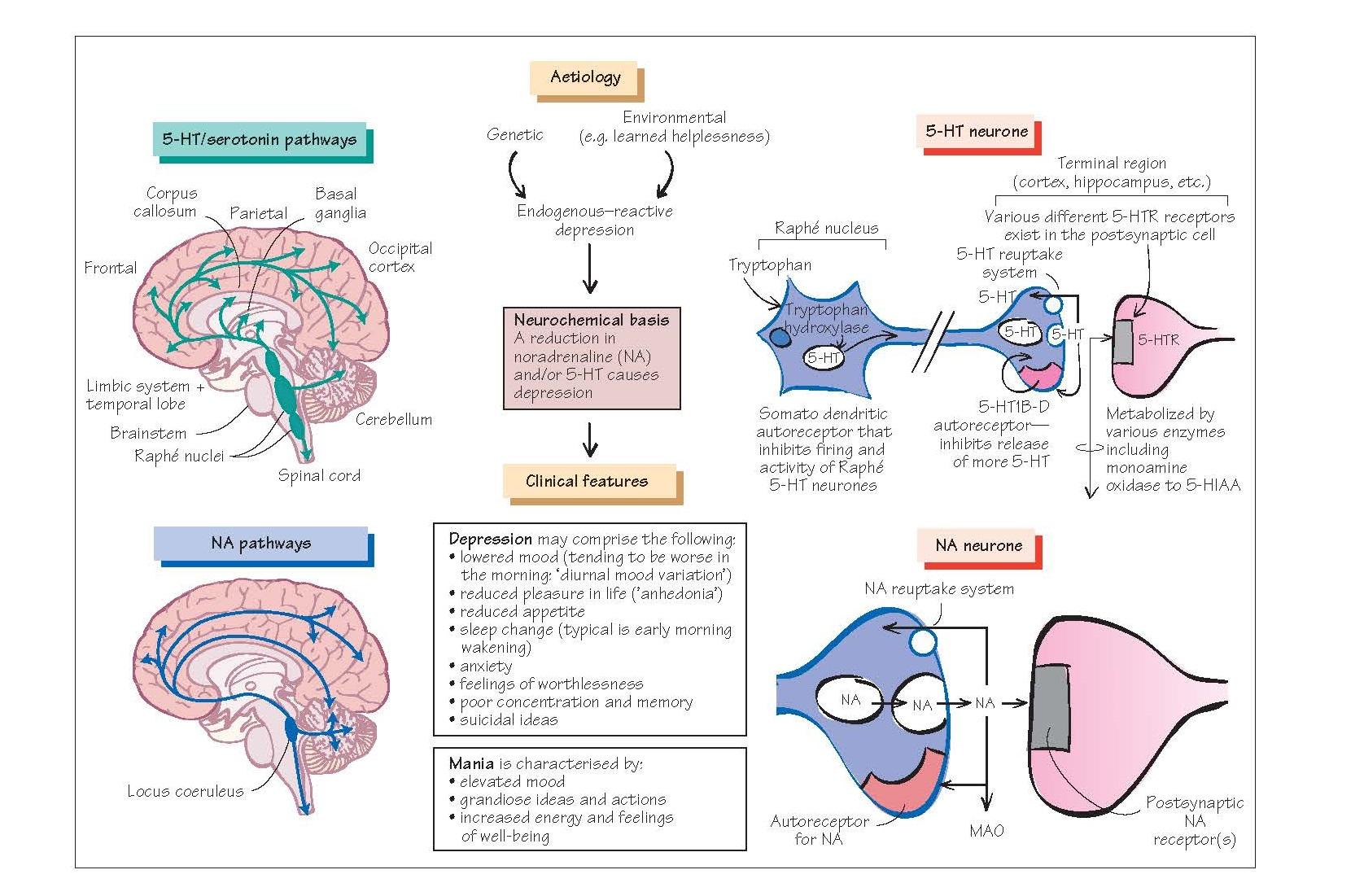 Neurochemical basis of depression