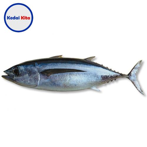 Ikan Tongkol Biasa 500 Gram
