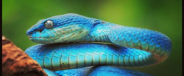 सपने में नीले रंग का सांप देखने का क्या मतलब होता है?