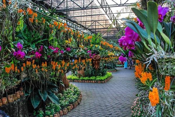 Nong Nooch sở hữu nhiều loài hoa lan quý hiếm