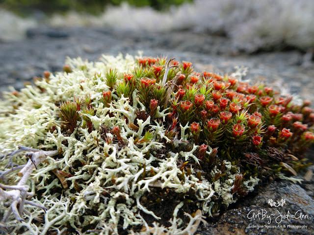 Newfoundland Moss & Lichen Photos