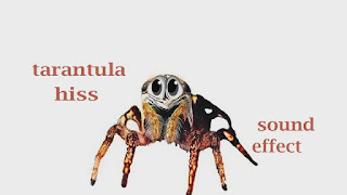 how tarantula sounds