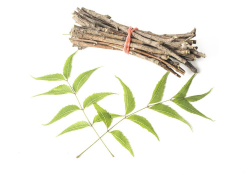 Use of Neem Twigs cure tooth decay