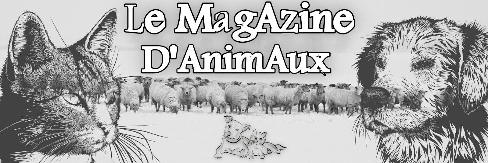le magazine des animaux