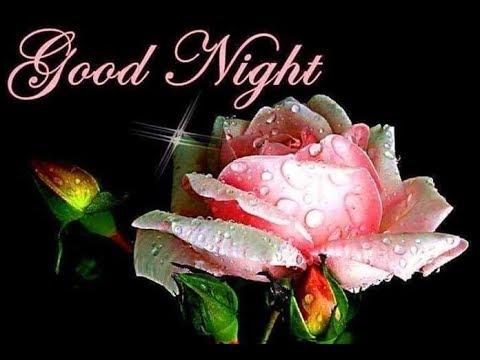 Beautiful Pink Rose Good Night Flower
