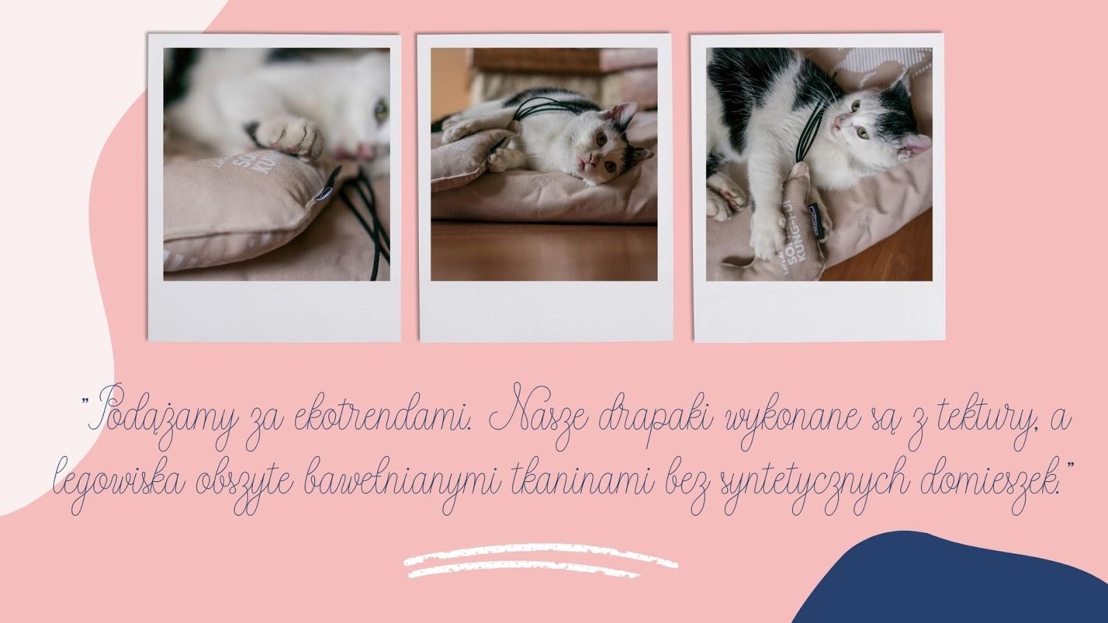 12 wyprawka dla małego kotka co trzeba kupić kotu prezent dla kota zabawki eko drapak co musi mieć kot jakie legowisko zabawki dla kota mykotty opinia ceny