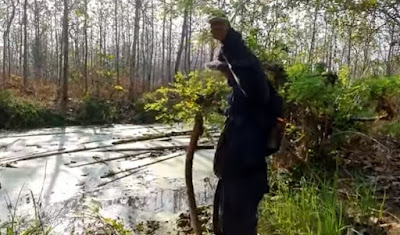 Mancing belut besar purba yang ganas di hutan jati
